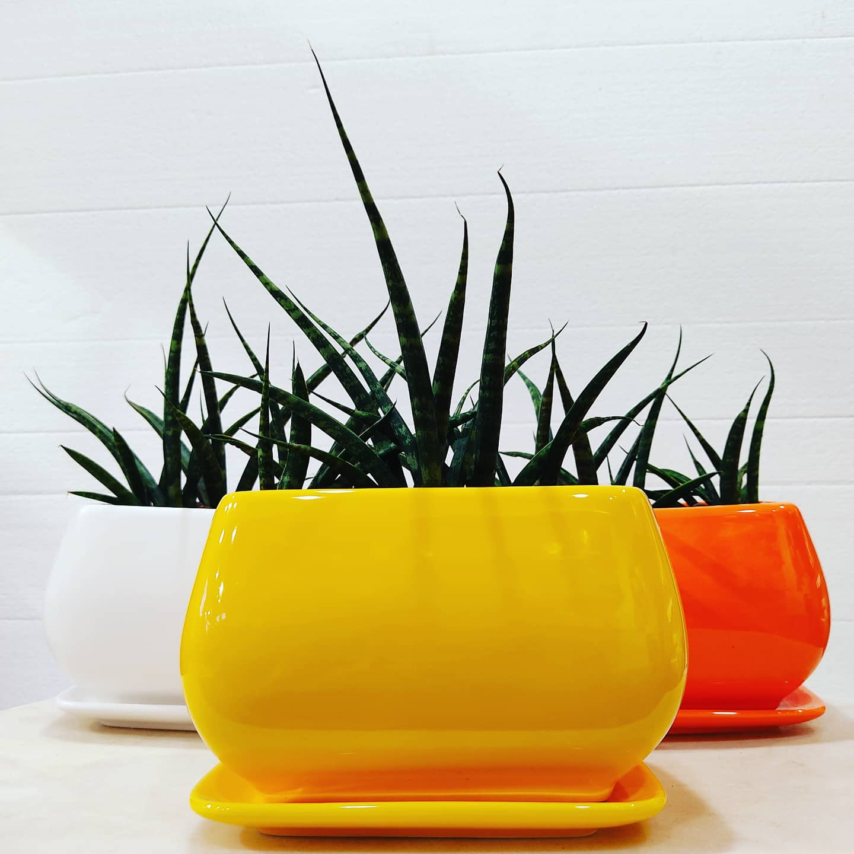 Ceramic Pots and mikado